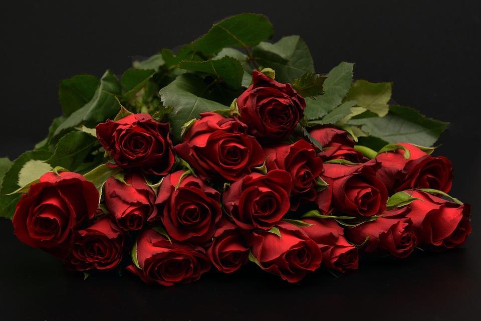 roses-1198275_960_720
